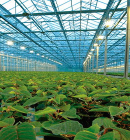 Genera temperatura uniforme para tus cultivos